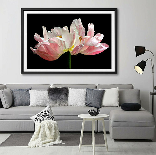 French Peony ~ Large Floral Wall Art therandomimage.com