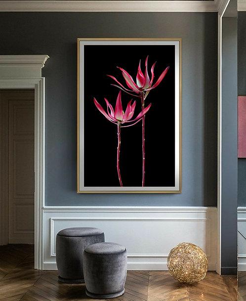 Leucadendron ~ Strawberries & Cream ~ Red Floral Wall Art Print therandomimage.com