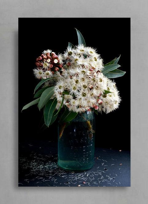 Corymbia Ficifolia- Snowflake Australian Nature Still Life Print therandomimage.com