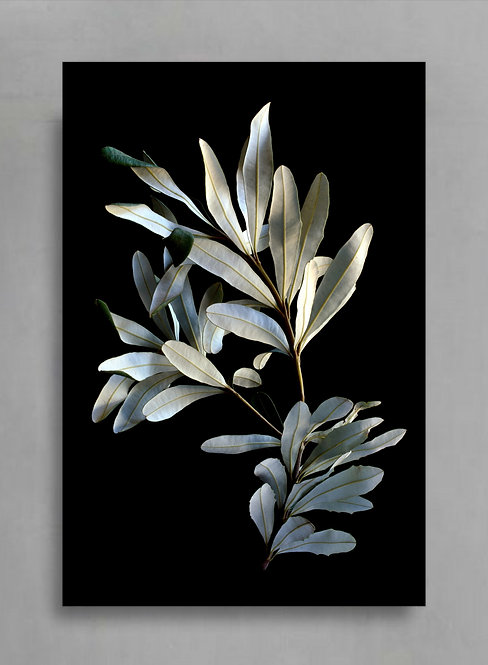 Banksia Leaves ~ Australian Botanical Photography Art therandomimage.com