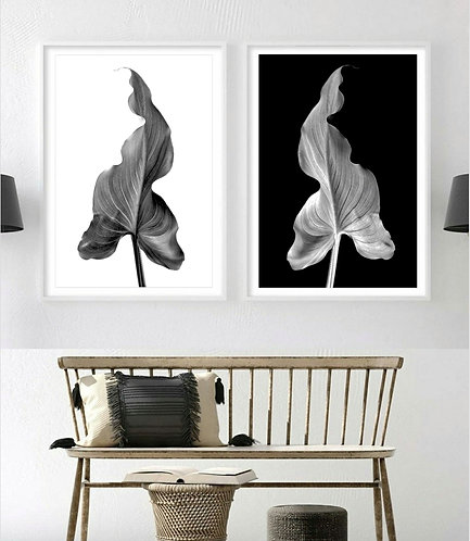 Arum Lily Leaf Diptych ~ Black and White Botanical Art Prints therandomimage.com
