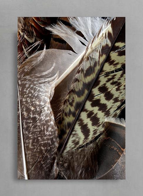 Feather Bundle ~ Large Feather Photography Print therandomimage.com