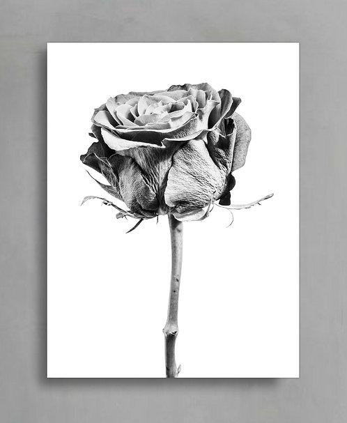 Monochrome Rose ~ Digital Download therandomimage.com