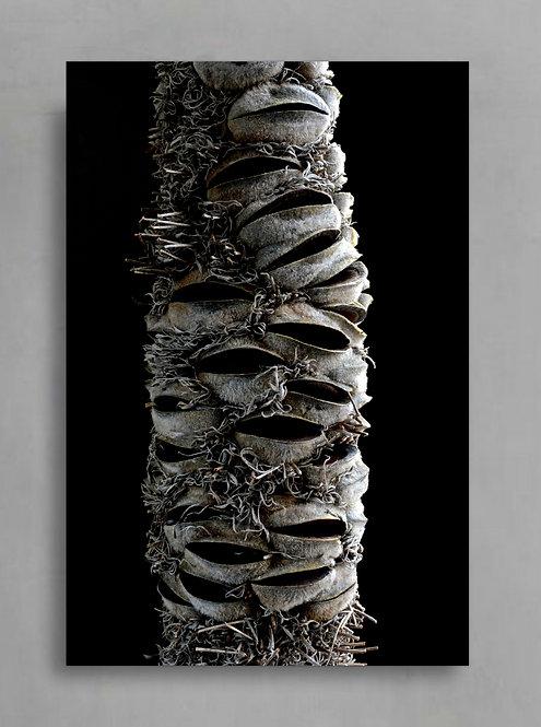 Banksia Pod ~ Australian Nature Photography Print therandomimage.com