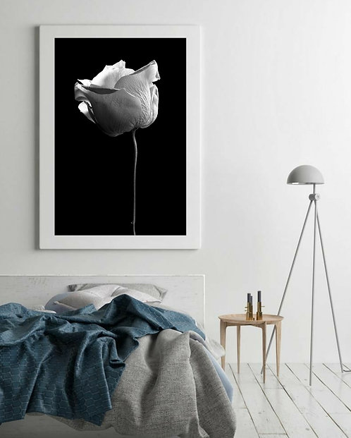 Single Stem Rose ~ Black And White Photography therandomimage.com