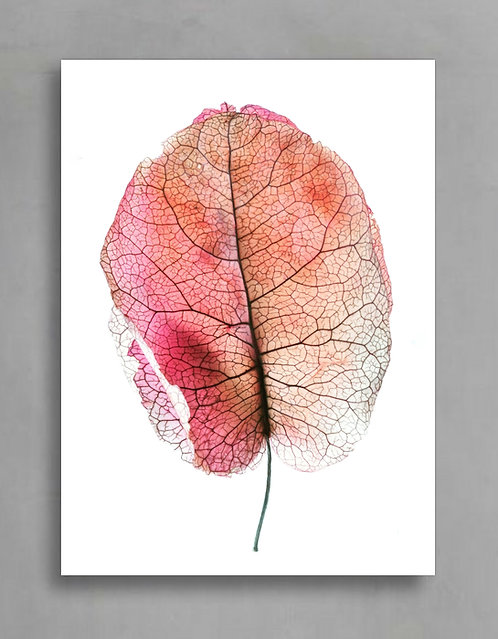 Pink Bougainvillea ~ Macro Bougainvillea Artwork therandomimage.com