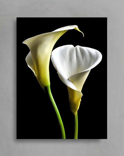 Arum Lilies ~ White Floral Artwork ~ Large Flower Photography Print therandomimage.com