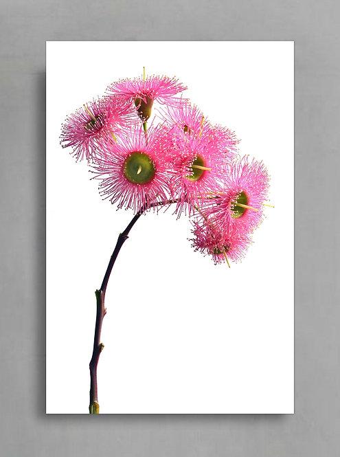 Pink Gum Blossoms Stem ~ Printable Digital Download therandomimage.com