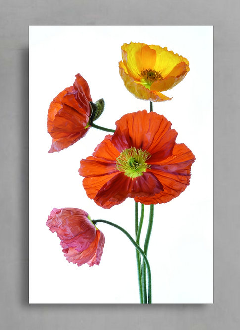 Colourful Poppy Flowers ~ Printable Digital Download therandomimage.com