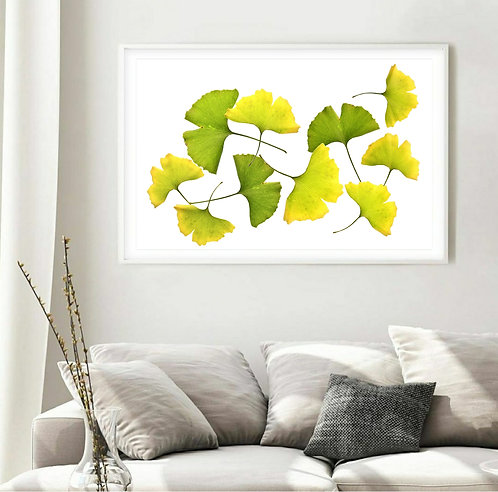 Ginkgo Leaves Collage ~ Large Botanical Wall Art ~ Nature Photography therandomimage.com