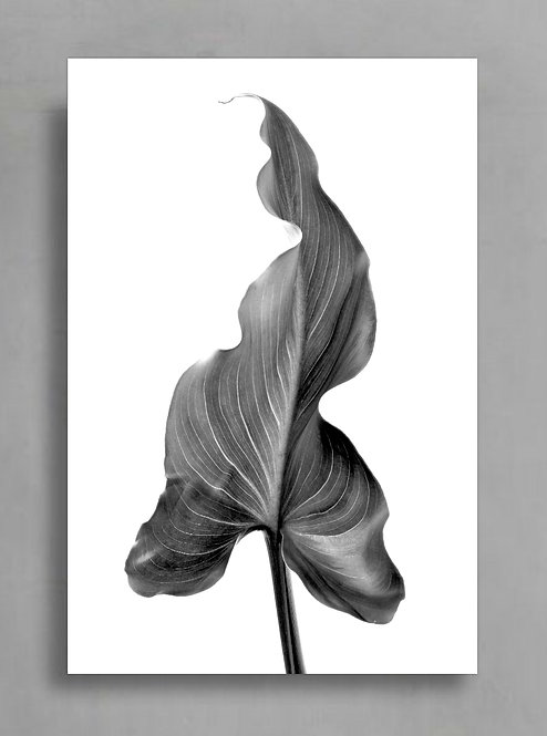 Lily Leaf in Black & White ~ Monochromatic Botanical Wall Art therandomimage.com