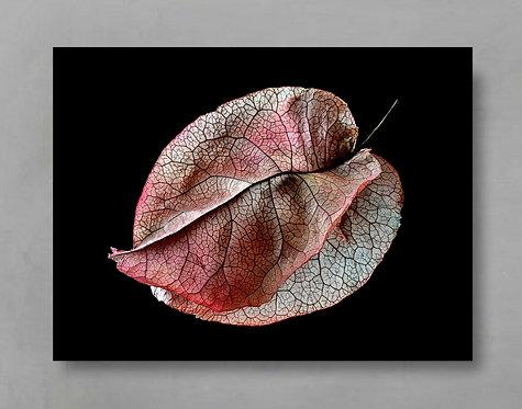 Pink Bougainvillea ~ Botanical Wall Art Print therandomimage.com