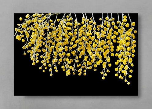 Wattle ~ Australian Floral Photography Print ~ Botanical Wall Art therandomimage.com
