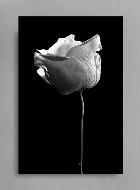 Single Stem Rose in Black & White ~ Printable Digital Download therandomimage.com