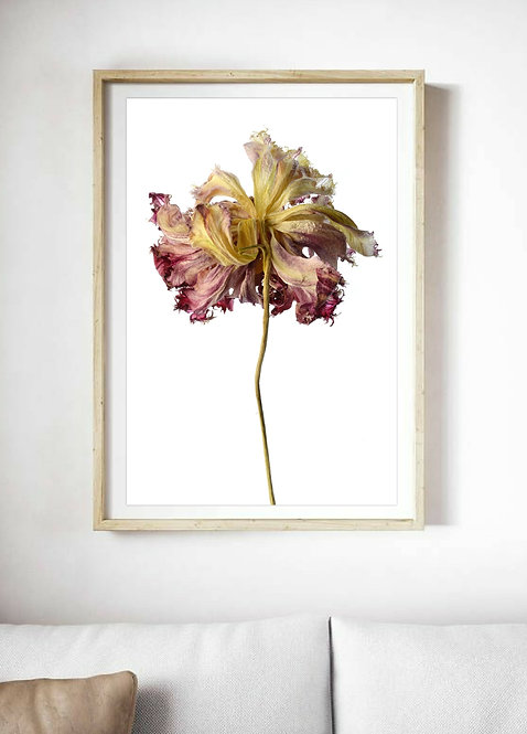 beauty in death dried flower photography print therandomimage.com