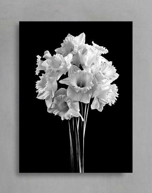 Daffodils in Black and White ~ Still Life Flower Photography therandomimage.com