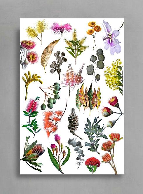 Australian Nature Collage -The Sequel ~ Botanical Wall Art ~ Photography Print therandomimage.com