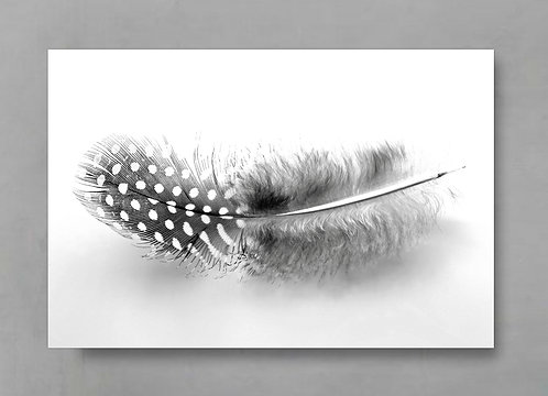 Spotted Guinea Fowl Feather ~ Black & White Art Print therandomimage.com