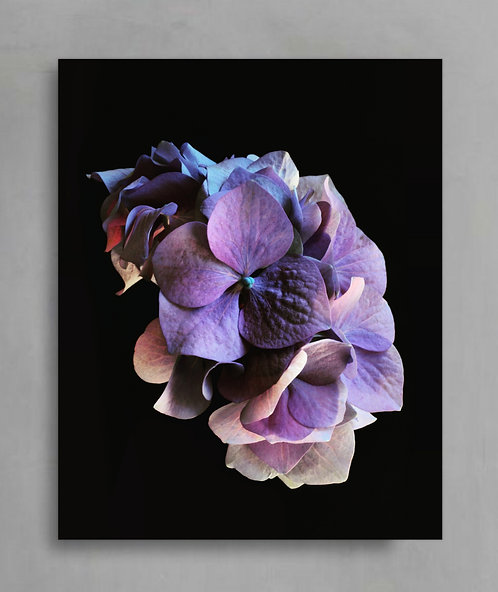 purple hydrangea moody floral artwork therandomimage.com