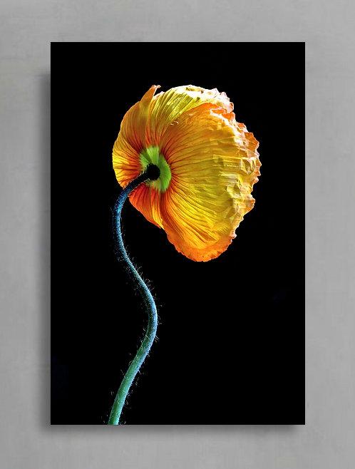 Yellow Poppy Pose ~ Printable Digital Download