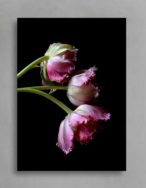 frayed tulips pink and black floral wall art therandomimage.com