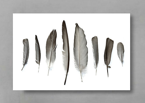 Eight Grey Feathers ~ Black and White Feather Wall Art Print therandomimage.com