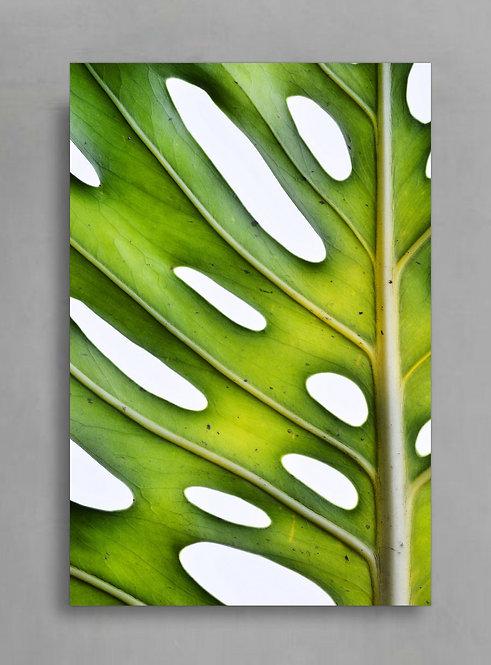 Monstera On White ~ Large Plant Print therandomimage.com