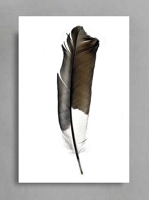 Feather Still Life ~ Minimalist Feather Wall Art Photography Print therandomimage.com