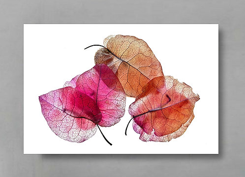 Bougainvillea Petals ~ Colourful Botanical Wall Decor therandomimage.com
