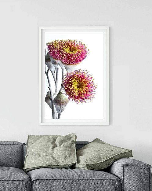 eucalyptus blossoms australian floral photography print Nadia Culph Therandomimage.com
