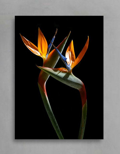 birds of paradise tropical wall art therandomimage.com