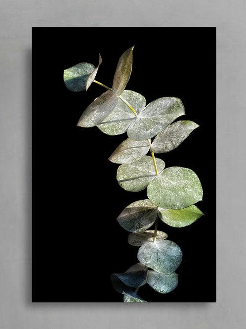 Eucalyptus Silver Dollar ~ Australian Plant Print therandomimage.com