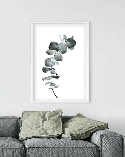 silver dollar stem Australian native plant print therandomimage.com
