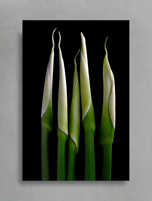 Calla Lily Stems ~ Moody Flower Photography Print therandomimage.com