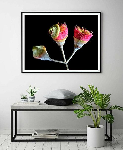 Pink Eucalyptus Blossoms ~ Printable Digital Download therandomimage.com