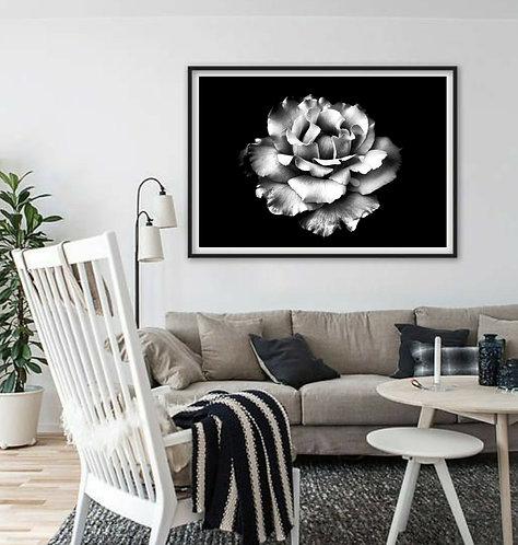 White Rose ~ Digital Download therandomimage.com