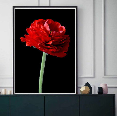 Red Ranunculus ~ Romantic Floral Artwork