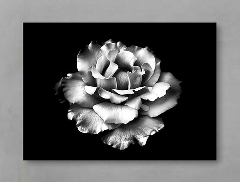 White Rose ~ Black And White Flower Print therandomimage.com
