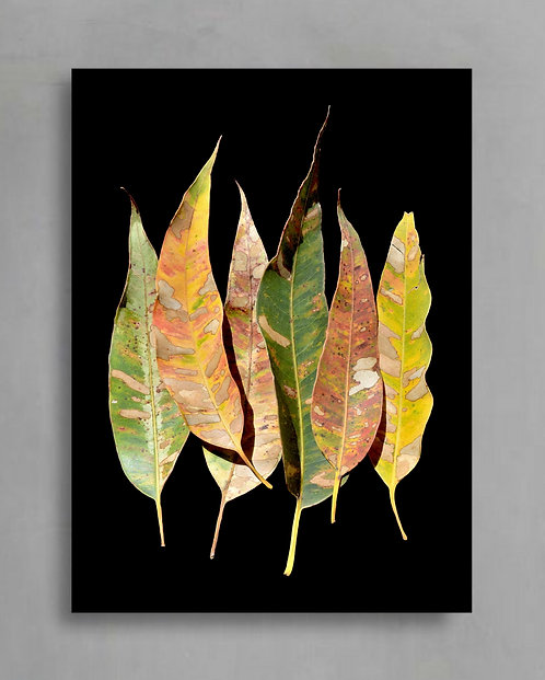 Eucalyptus Leaves ~ Australian Nature Photography Print therandomimage.com