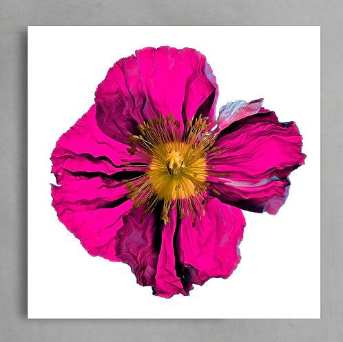 Pretty in Pink - Poppy Still Life ~ Printable Fuchsia Flower Art therandomimage.com