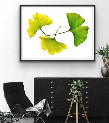 Ginkgo Leaves ~ Bright Botanical Wall Art therandomimage.com