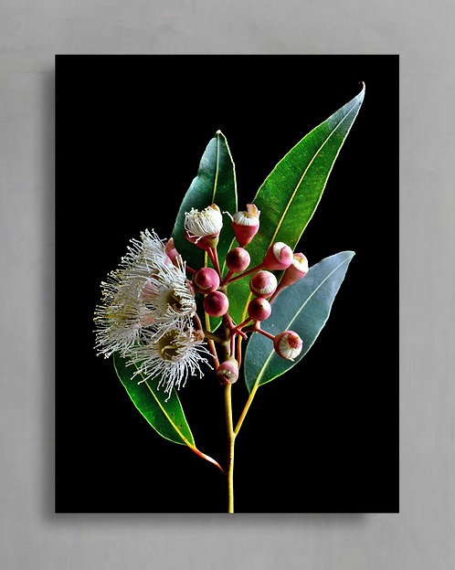 Blossom Buds ~ Australian Nature Still Life Photography Print therandomimage.com