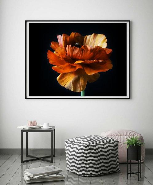 Orange Ranunculus ~ Printable Digital Download therandomimage.com