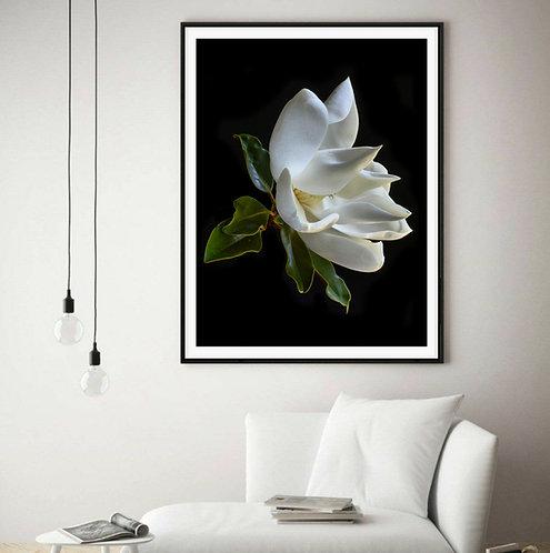 white magnolia grandiflora floral wall art therandomimage.com