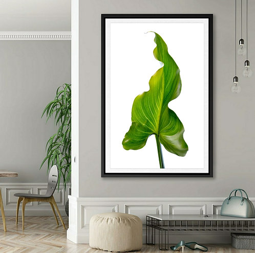 Lily Leaf in Colour ~ Leaf Photography Print therandomimage.com