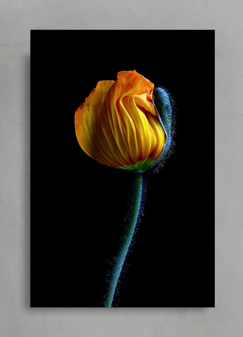 Yellow Poppy Bud ~ Moody Floral Wall Art therandomimage.com