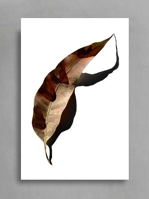 Shadow Puppets ~ Australian Leaf Art Print therandomimage.com