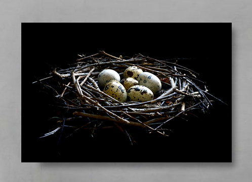 nest and quail eggs moody farmhouse decor therandomimage.com