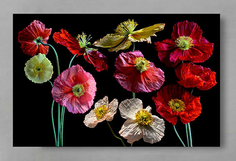 Poppy Flower Collage ~ Colourful Floral Wall Art therandomimage.com