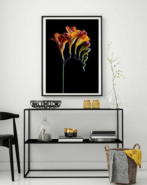 Orange Freesia Flowers - Printable Photography Download therandomimage.com